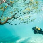 Brasil Secreto – Nova Série da National Geographic sobre o Pantanal