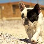 Pacote de Férias para Cães – The Paw Seasons Hotel