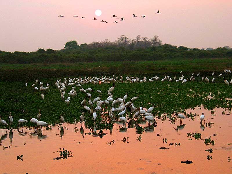 Dicas de turismo no Pantanal (MT)