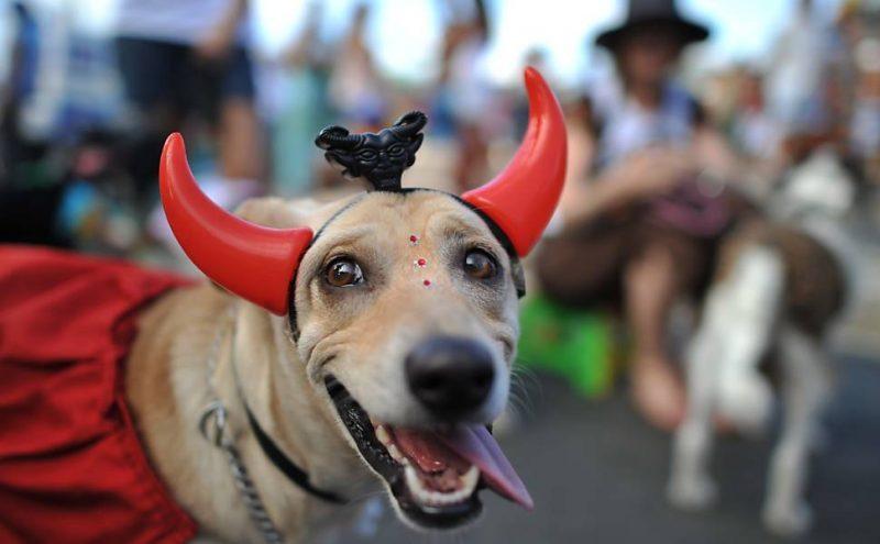 Carnaval de Brasília (DF) 2017 terá Bloco de Rua para Cachorros